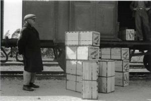תפוזים לייצוא בתחנת הרכבת של חדרה בשנת 1932