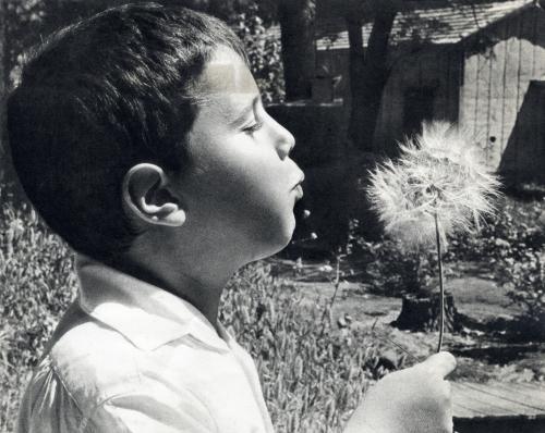 עם עובד 1965 צלם בוריס כרמי אלבום העמק נשיפה בזקן התיש